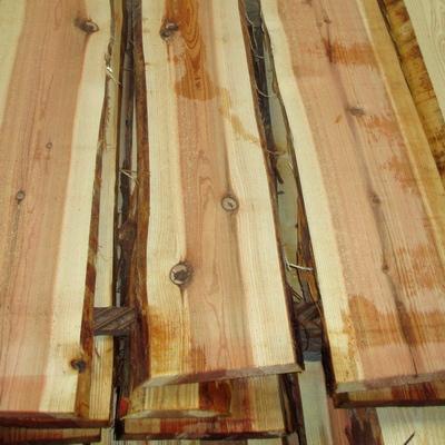 Thuja Holz Verwendung espen japanische sicheltanne sugi
